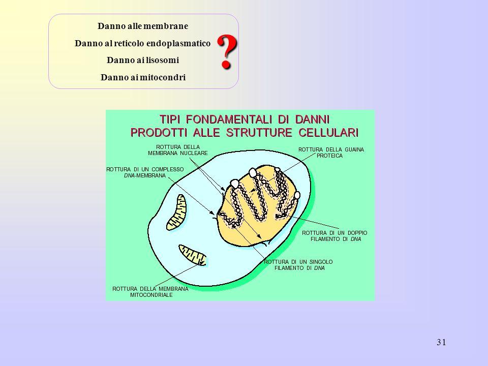 Danno al reticolo endoplasmatico