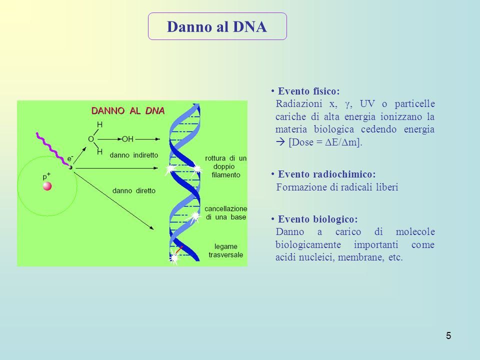 Danno al DNA Evento fisico: