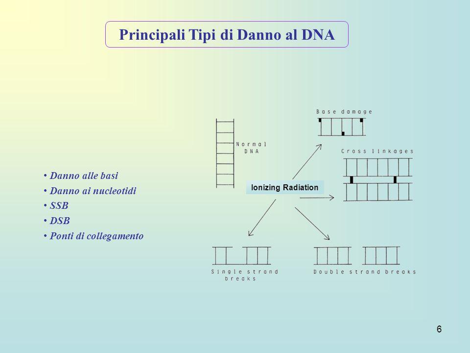 Principali Tipi di Danno al DNA