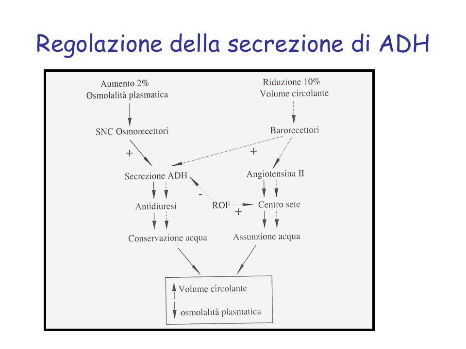 Regolazione della secrezione di ADH
