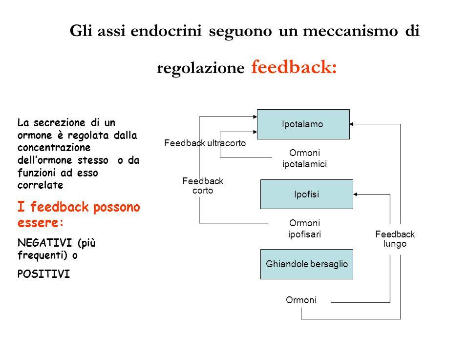 Gli assi endocrini seguono un meccanismo di regolazione feedback: