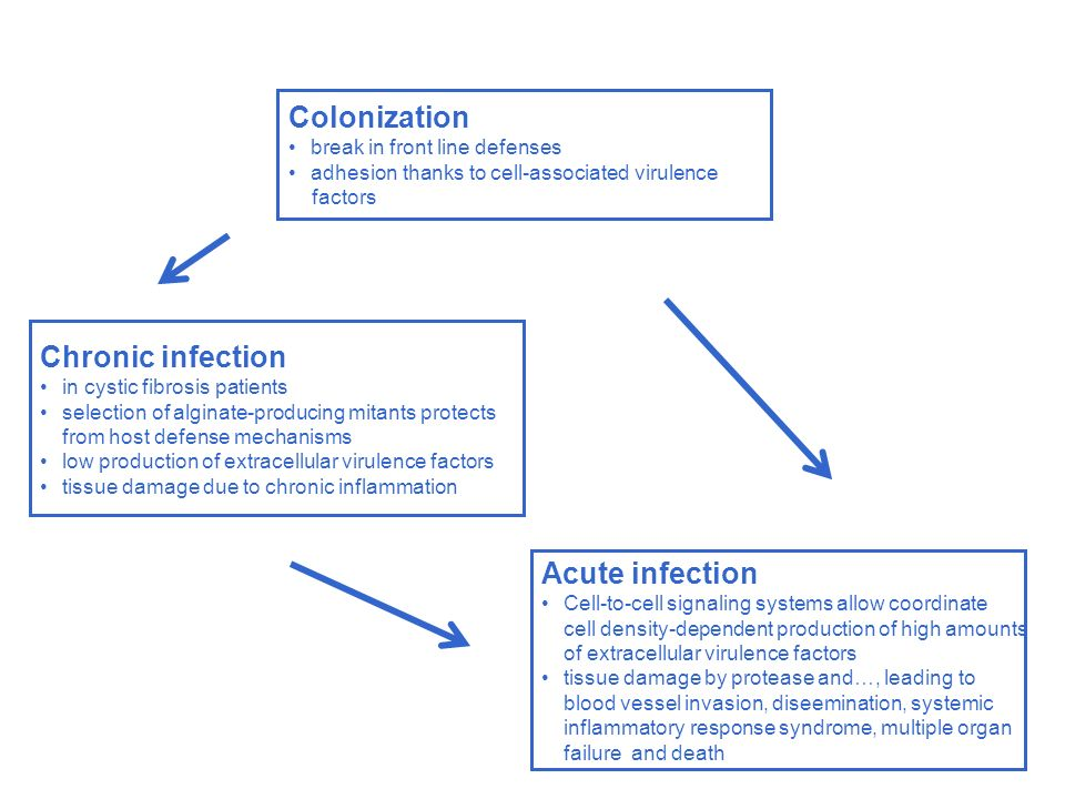 Colonization Chronic infection Acute infection