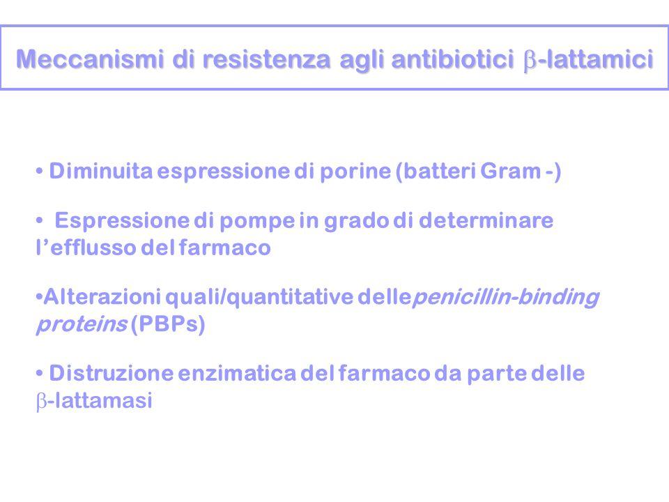 Meccanismi di resistenza agli antibiotici -lattamici