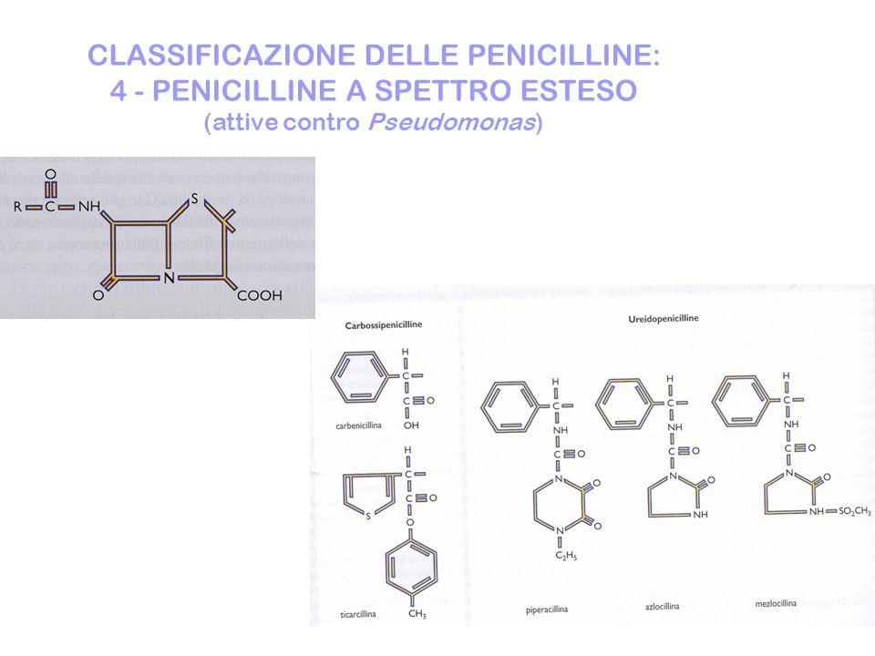 CLASSIFICAZIONE DELLE PENICILLINE: 4 - PENICILLINE A SPETTRO ESTESO