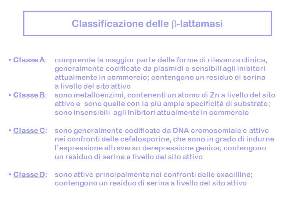 Classificazione delle -lattamasi