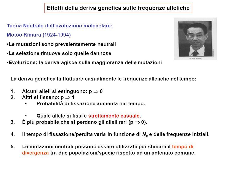 Effetti della deriva genetica sulle frequenze alleliche