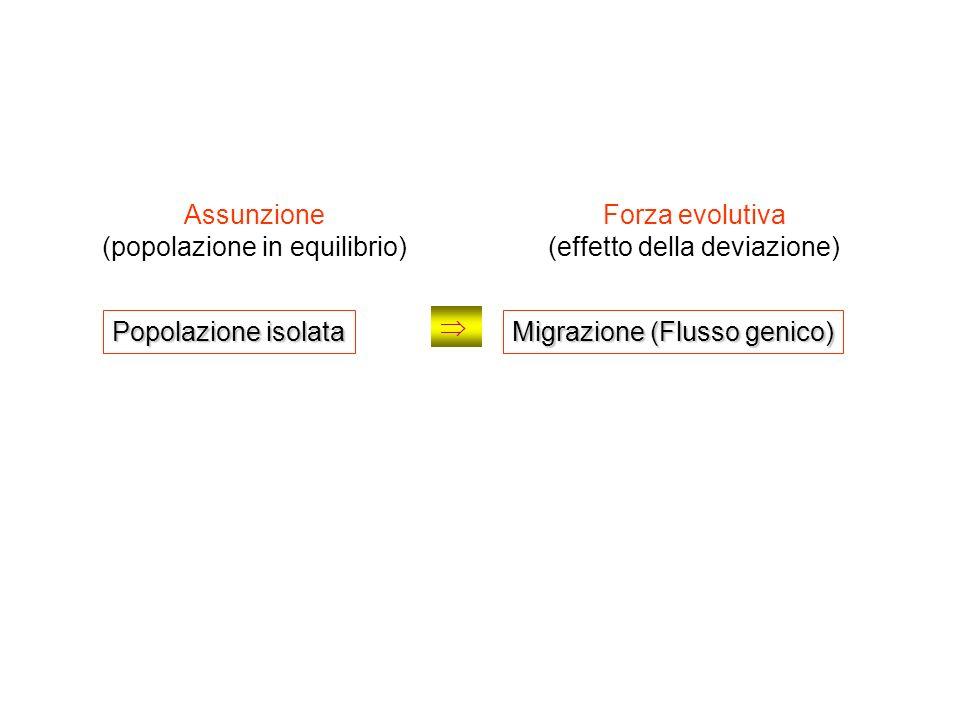 (popolazione in equilibrio) Forza evolutiva (effetto della deviazione)