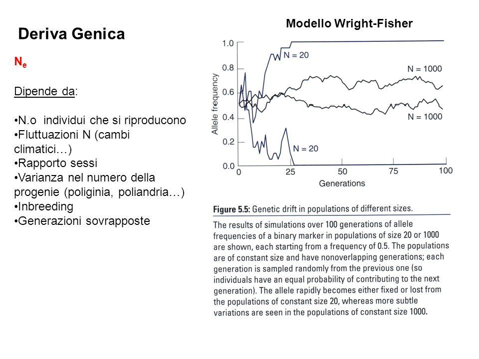 Deriva Genica Modello Wright-Fisher Ne Dipende da: