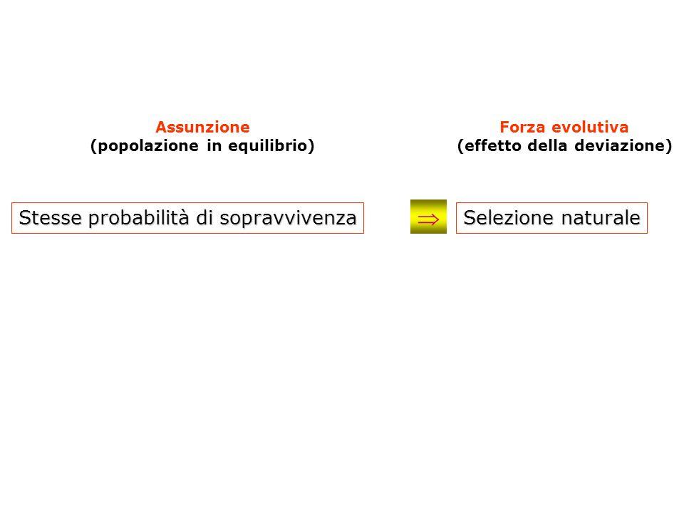 (popolazione in equilibrio) (effetto della deviazione)