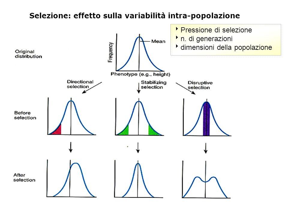 Selezione: effetto sulla variabilità intra-popolazione
