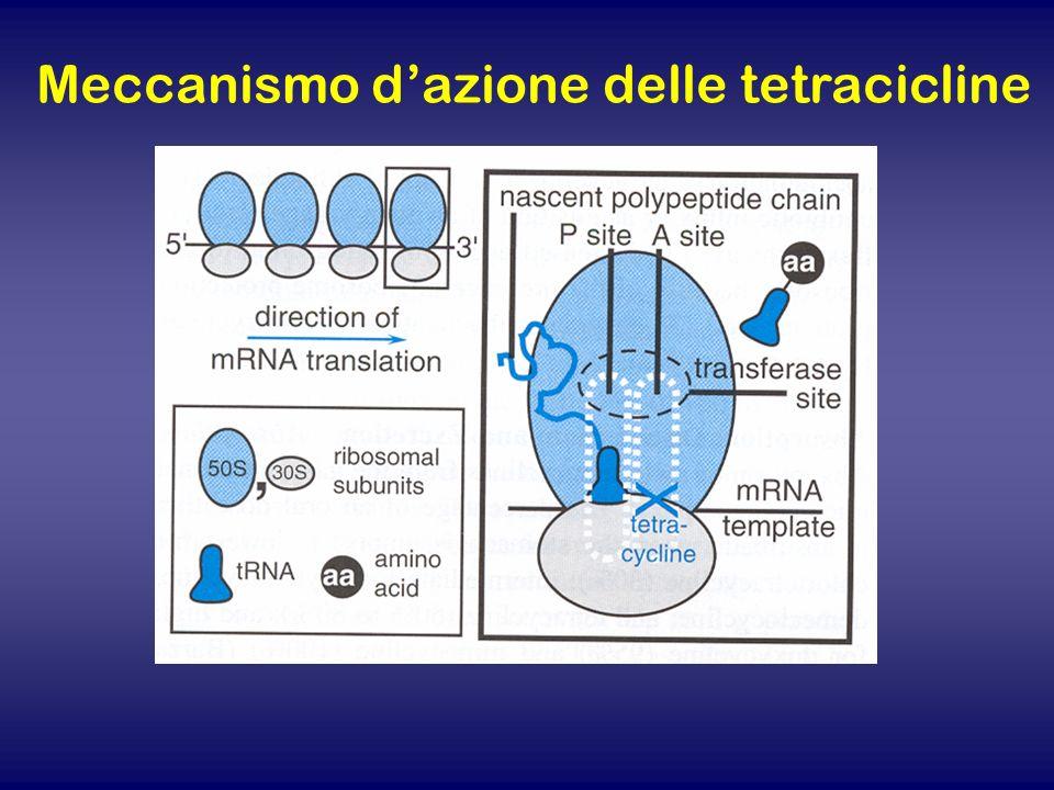 Meccanismo d'azione delle tetracicline