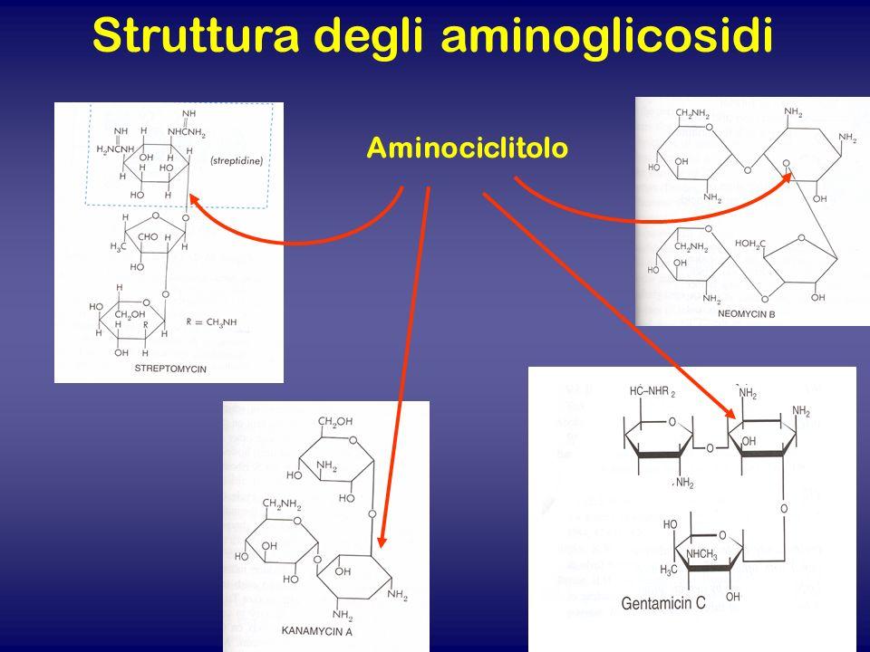 Struttura degli aminoglicosidi