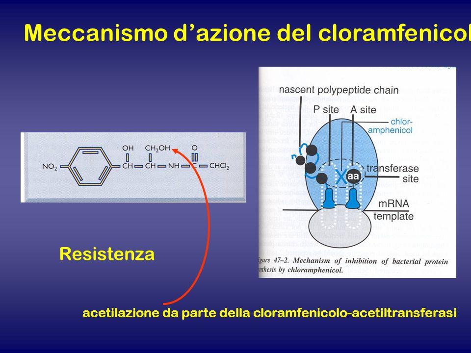 Meccanismo d'azione del cloramfenicolo
