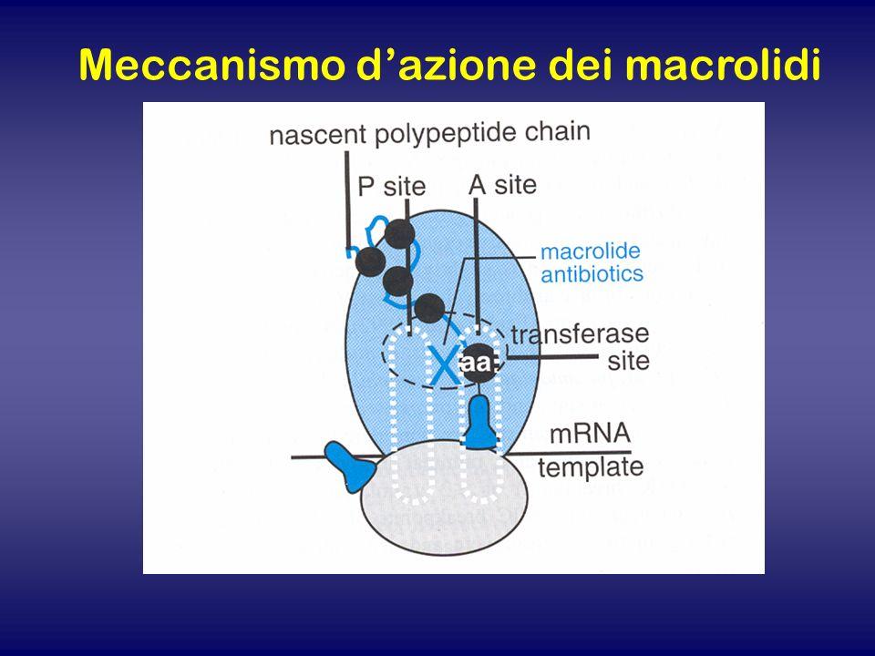 Meccanismo d'azione dei macrolidi