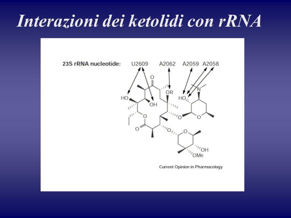 Interazioni dei ketolidi con rRNA