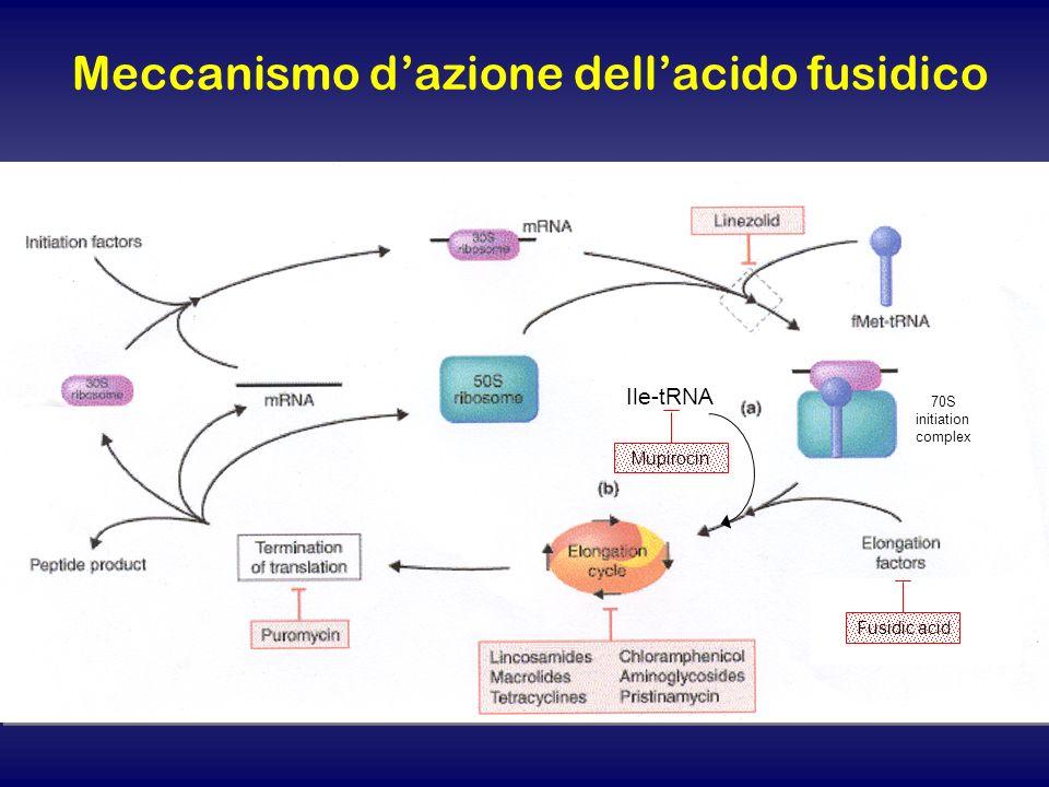 Meccanismo d'azione dell'acido fusidico