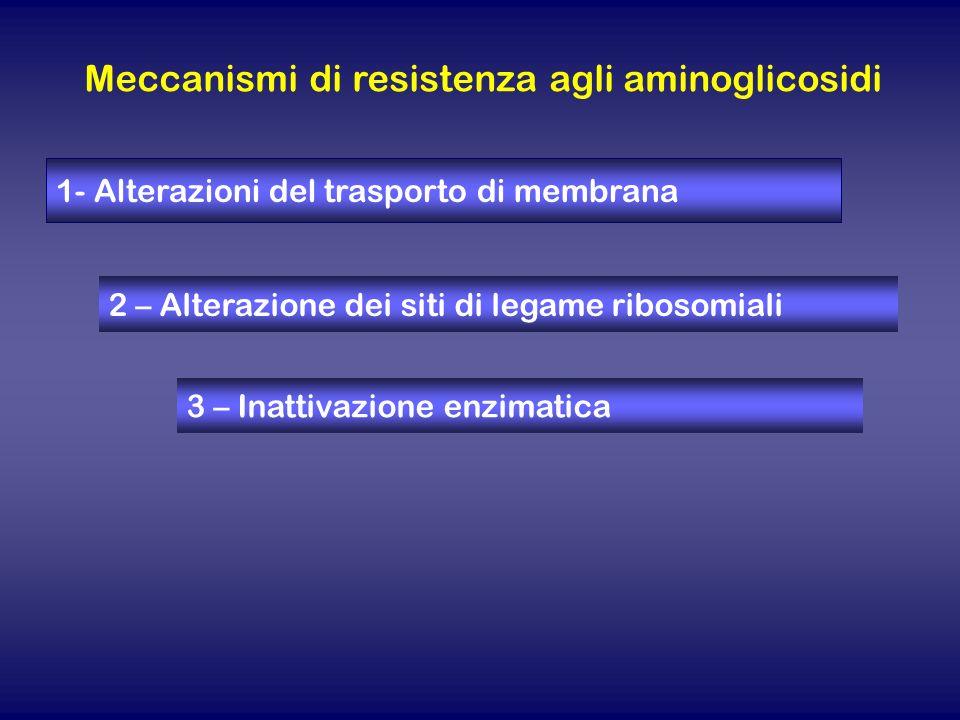 Meccanismi di resistenza agli aminoglicosidi