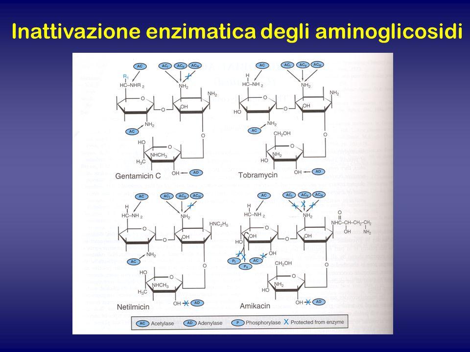 Inattivazione enzimatica degli aminoglicosidi
