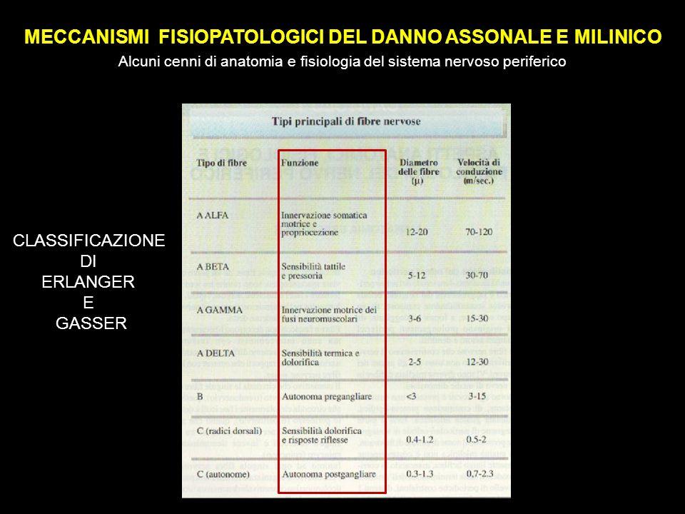 MECCANISMI FISIOPATOLOGICI DEL DANNO ASSONALE E MILINICO