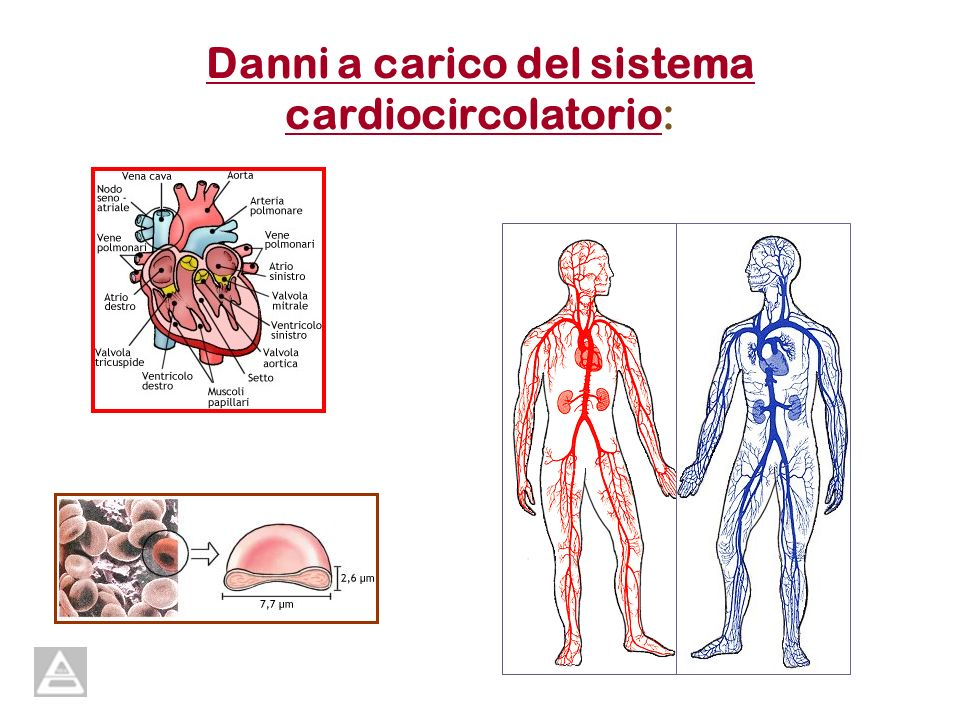 Danni a carico del sistema cardiocircolatorio: