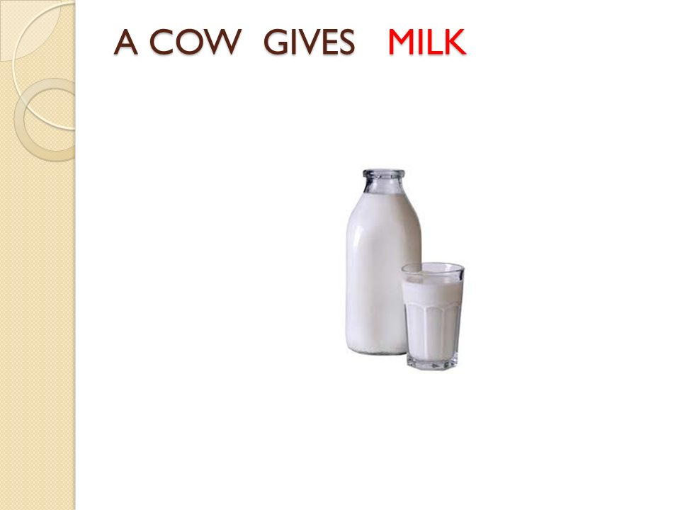 A COW GIVES MILK