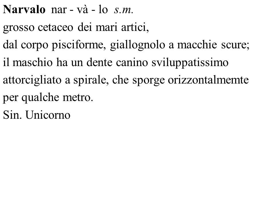 Narvalo nar - và - lo s.m. grosso cetaceo dei mari artici, dal corpo pisciforme, giallognolo a macchie scure;