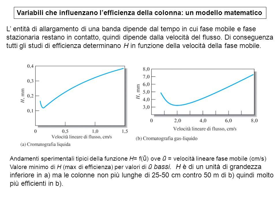 Variabili che influenzano l'efficienza della colonna: un modello matematico