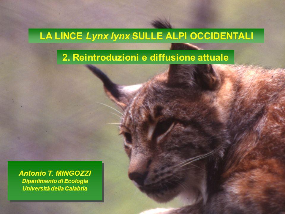 LA LINCE Lynx lynx SULLE ALPI OCCIDENTALI