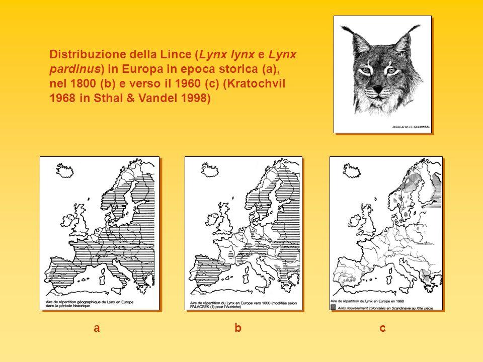 Distribuzione della Lince (Lynx lynx e Lynx pardinus) in Europa in epoca storica (a), nel 1800 (b) e verso il 1960 (c) (Kratochvil 1968 in Sthal & Vandel 1998)