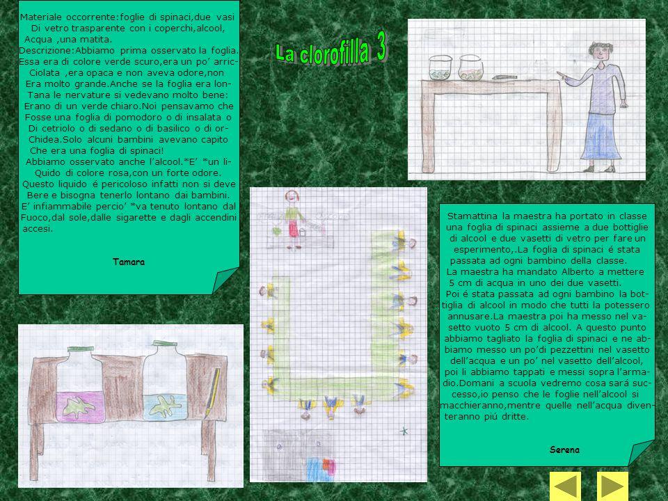 La clorofilla 3 Materiale occorrente:foglie di spinaci,due vasi
