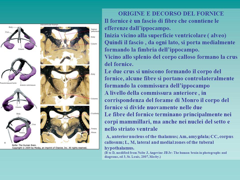 ORIGINE E DECORSO DEL FORNICE
