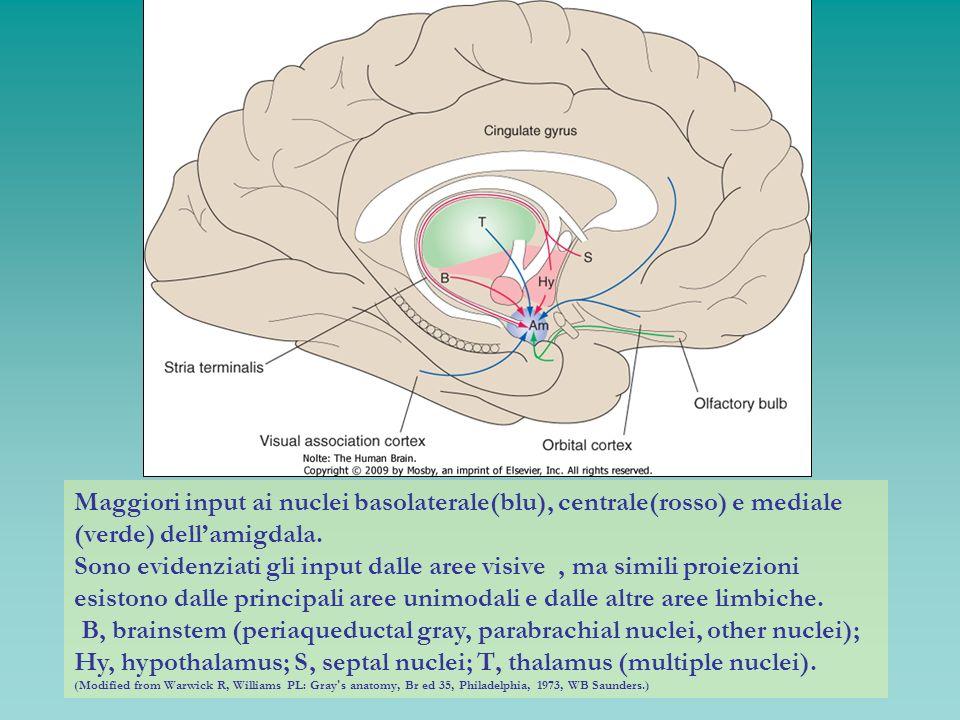 Maggiori input ai nuclei basolaterale(blu), centrale(rosso) e mediale (verde) dell'amigdala.