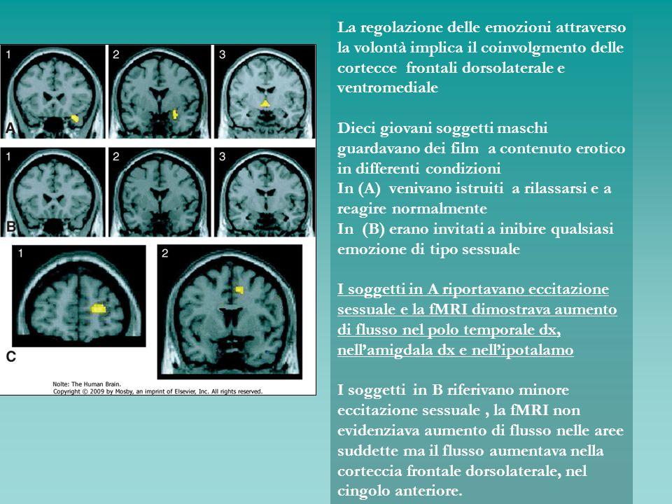 La regolazione delle emozioni attraverso la volontà implica il coinvolgmento delle cortecce frontali dorsolaterale e ventromediale