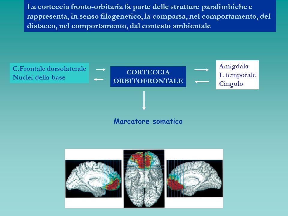 La corteccia fronto-orbitaria fa parte delle strutture paralimbiche e rappresenta, in senso filogenetico, la comparsa, nel comportamento, del distacco, nel comportamento, dal contesto ambientale