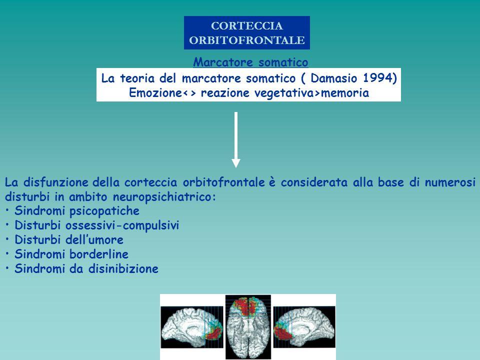 La teoria del marcatore somatico ( Damasio 1994)