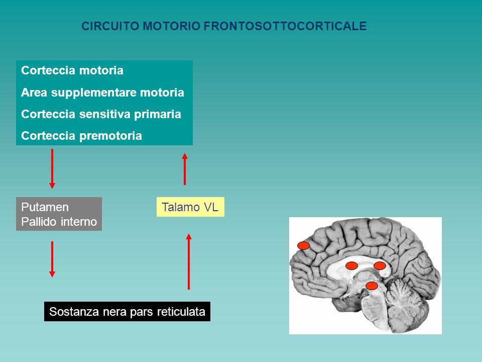 CIRCUITO MOTORIO FRONTOSOTTOCORTICALE
