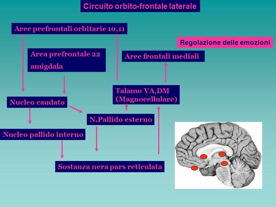 Circuito orbito-frontale laterale