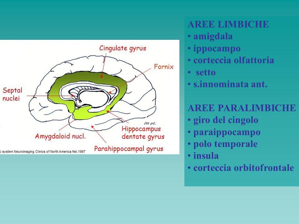 AREE LIMBICHE amigdala. ippocampo. corteccia olfattoria. setto. s.innominata ant. AREE PARALIMBICHE.