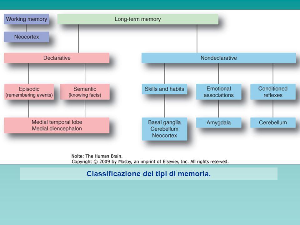 Classificazione dei tipi di memoria.