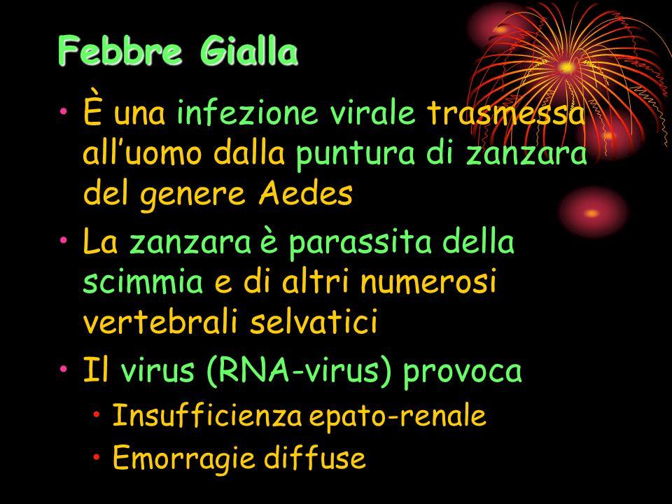 Febbre Gialla È una infezione virale trasmessa all'uomo dalla puntura di zanzara del genere Aedes.