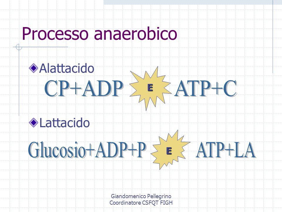 Processo anaerobico CP+ADP ATP+C Glucosio+ADP+P ATP+LA Alattacido