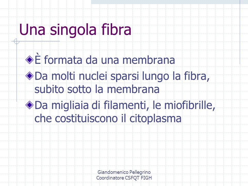 Giandomenico Pellegrino Coordinatore CSFQT FIGH
