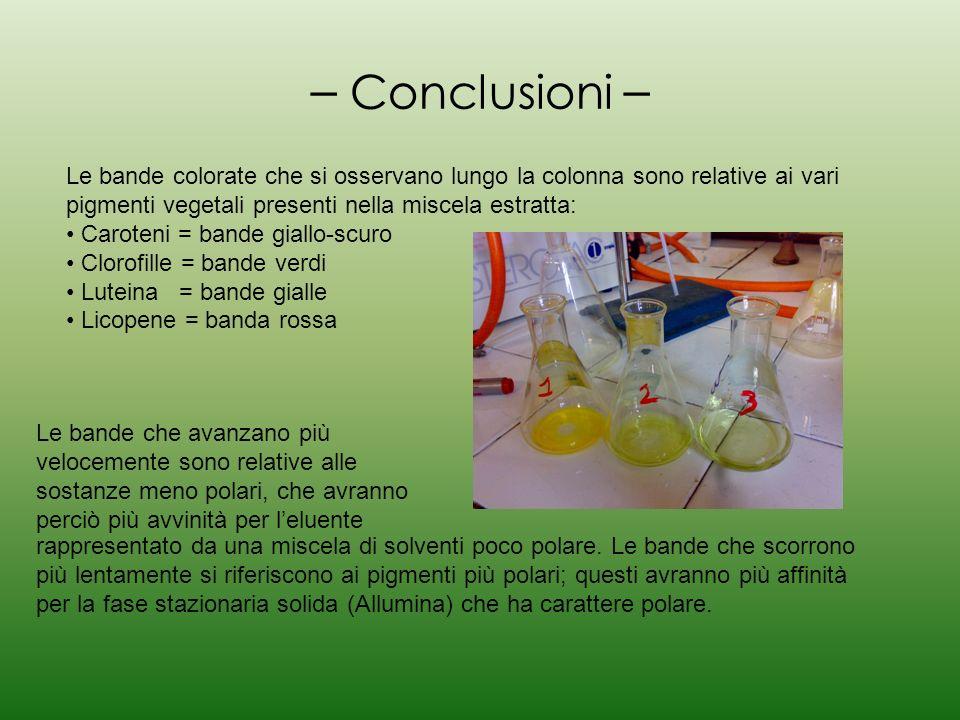 – Conclusioni – Le bande colorate che si osservano lungo la colonna sono relative ai vari pigmenti vegetali presenti nella miscela estratta: