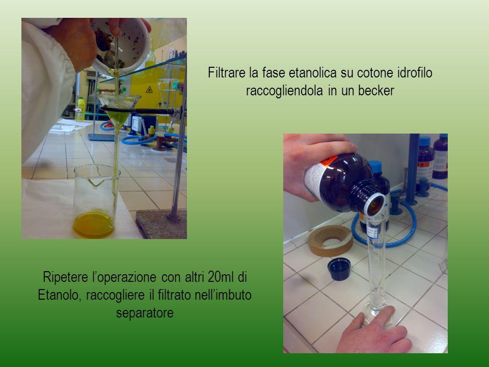 Filtrare la fase etanolica su cotone idrofilo raccogliendola in un becker