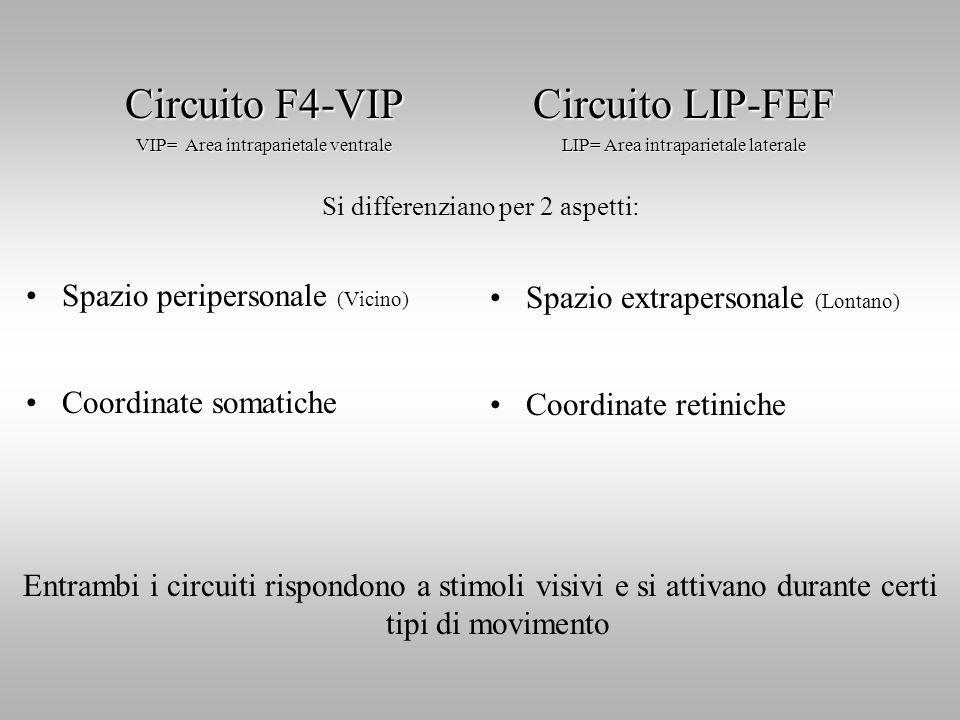 Circuito F4-VIP Circuito LIP-FEF Spazio peripersonale (Vicino)