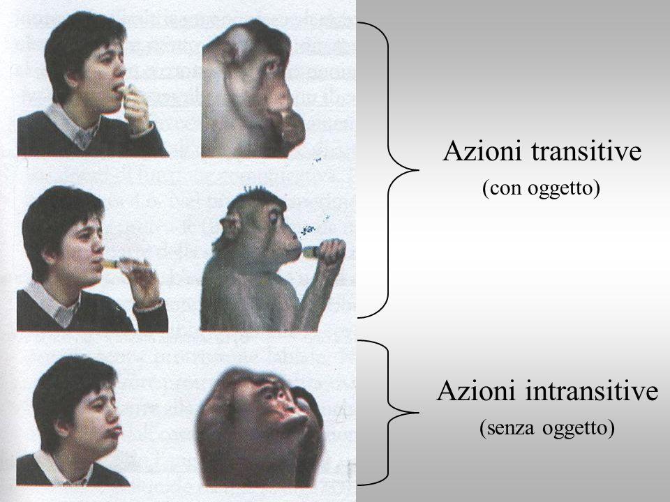 Azioni transitive (con oggetto) Azioni intransitive (senza oggetto)