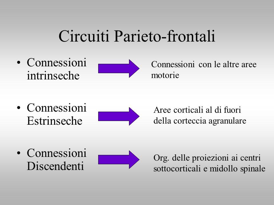 Circuiti Parieto-frontali