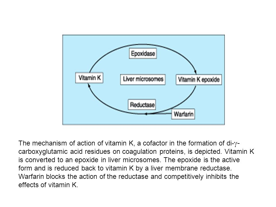 The mechanism of action of vitamin K, a cofactor in the formation of di-g-carboxyglutamic acid residues on coagulation proteins, is depicted.