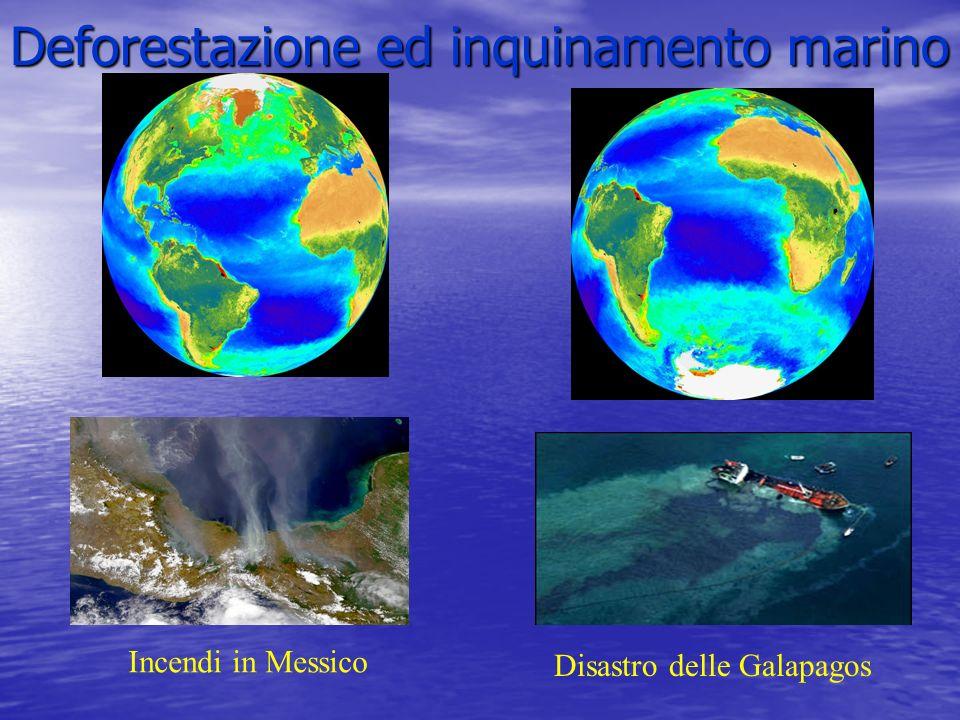 Deforestazione ed inquinamento marino