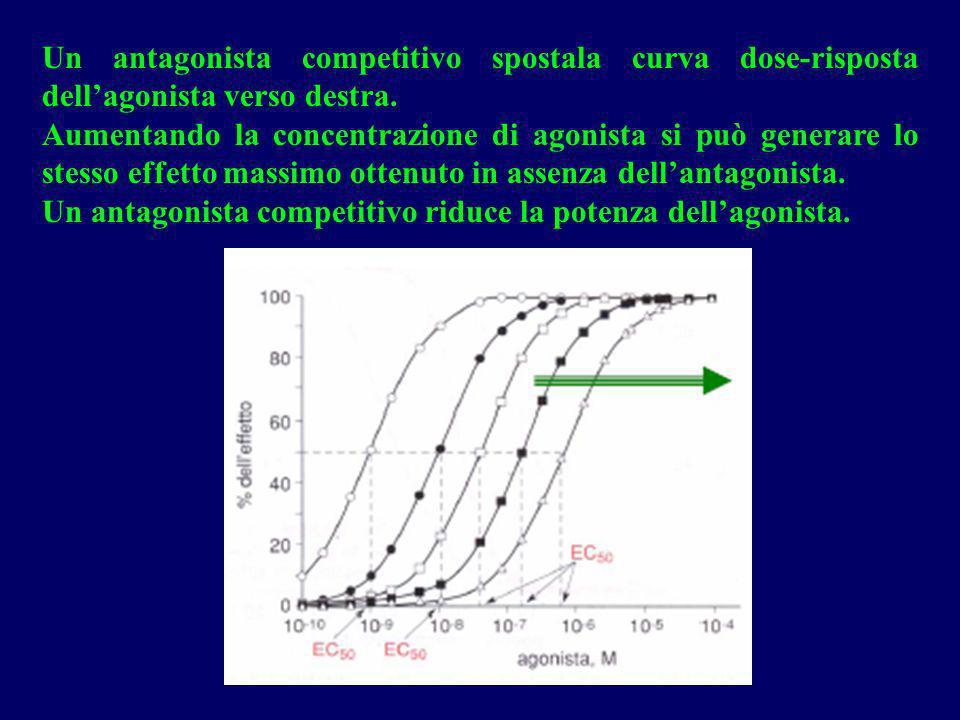 Un antagonista competitivo spostala curva dose-risposta dell'agonista verso destra.